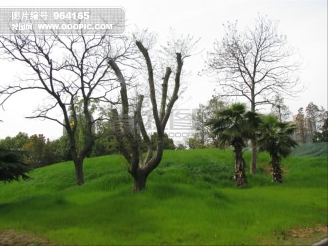 园林绿化素材图片下载 自然风景 园林风景 绿化 青草 绿色植被 树木