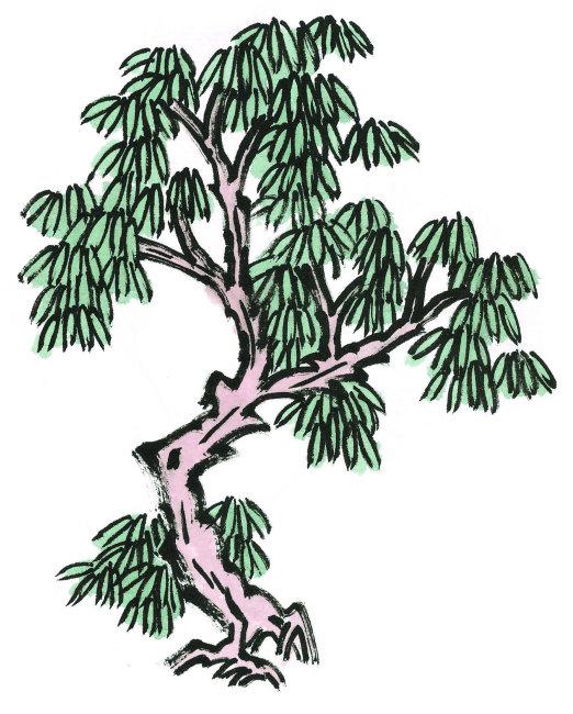 松树平面手绘图