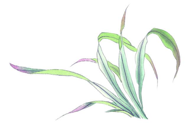 中国书画 气势 气韵 境界 花果植物 叶子 插画 中国艺术 国画 中国画图片