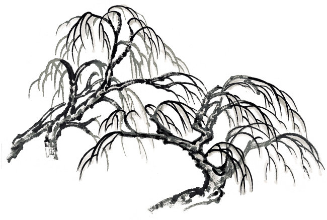 简约柳树黑白手绘图