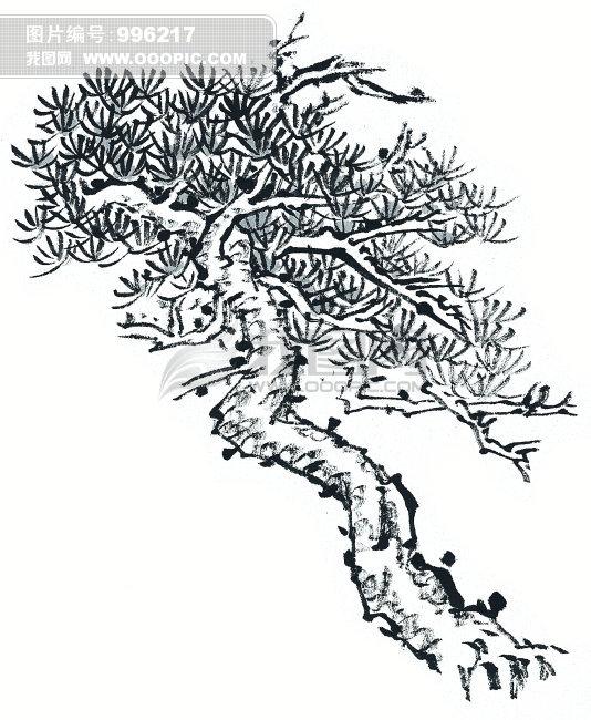 插画素材_古松树