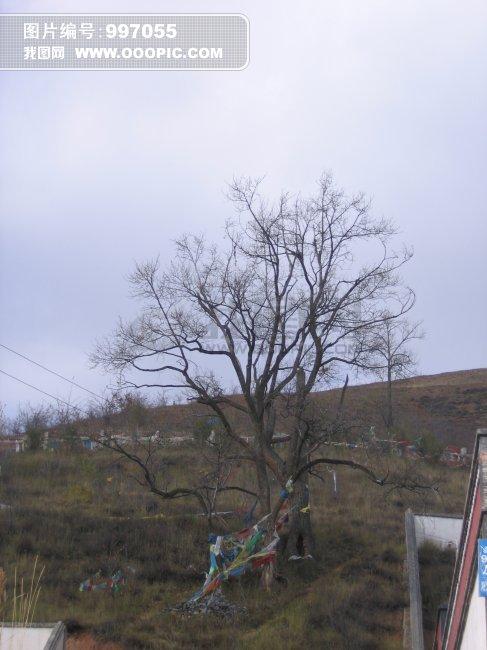 枯萎的树木图片素材(图片编号:997055)