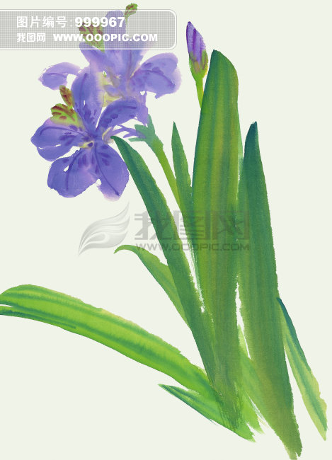 中国艺术植物画