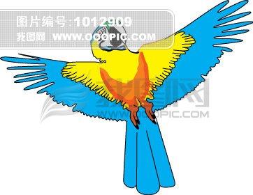 鹦鹉/鹦鹉 八哥鸟 翱翔飞翔