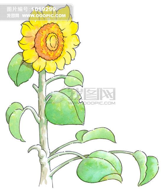边框; 向日葵图片_向日葵图片简笔画_卡通向日葵图片; 向日葵 花 花朵
