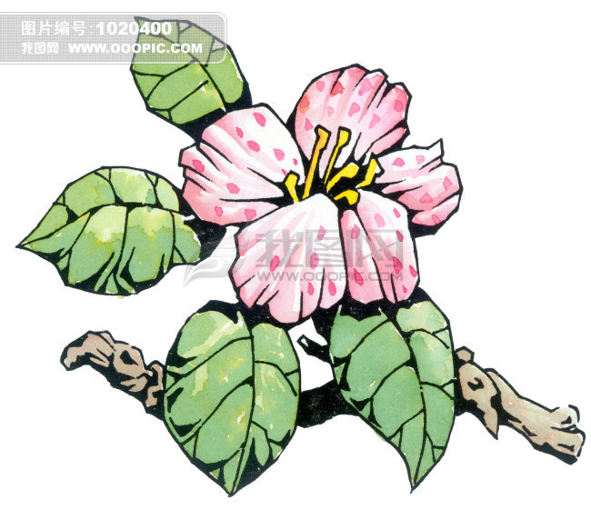 植物插画 漫画 想象 手绘