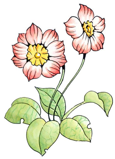 高清平面设计素材植物插画下载图片