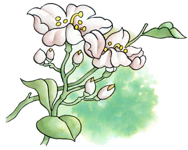白玉莲花插画图片下载 白玉莲花插画 淡墨卡通风格画 可爱水彩画 垂直