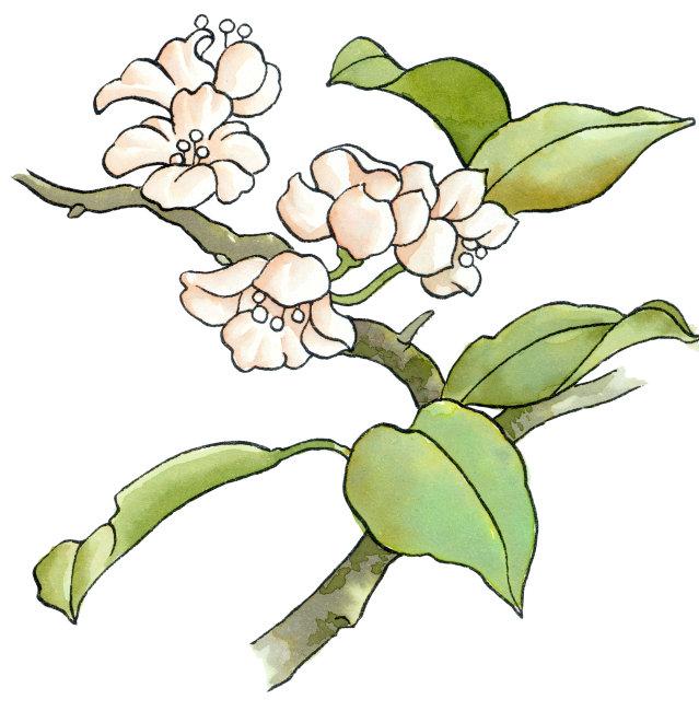 小白花插画图片下载 小白花插画 淡墨卡通风格画 可爱水彩画 方图
