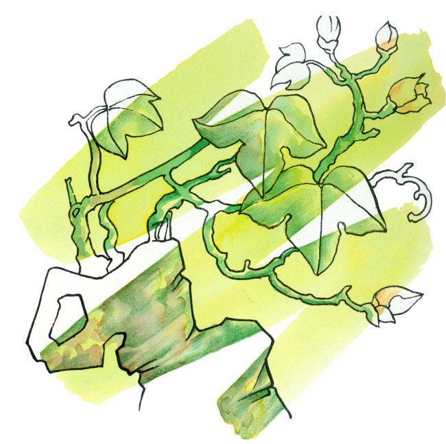 植物插画图片下载 留白 物体 树 植物 花朵 叶子 方图 创意 设计 想象