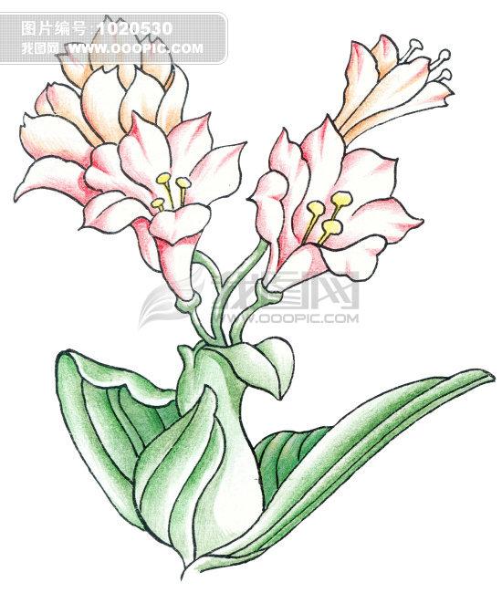 卡通植物画图片素材(图片编号; 花朵简笔图画大全; 艺术画 水墨画