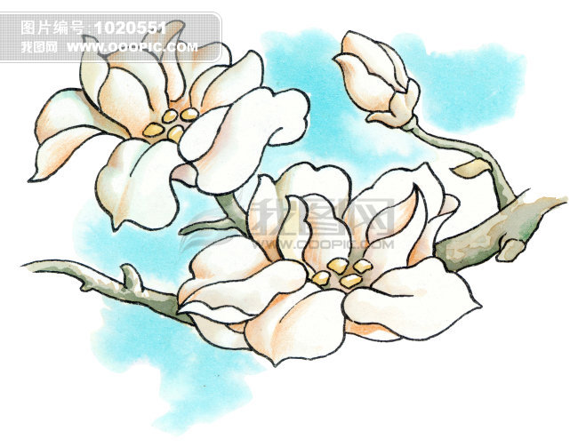 牡丹花卡通画_卡通漫画动漫插画绘画