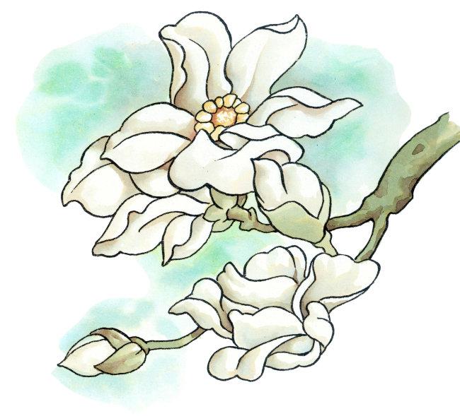 卡通植物画