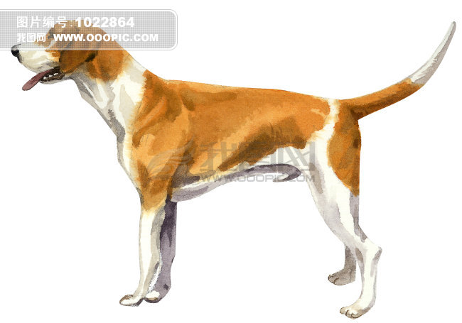 可爱的小狗画画图片