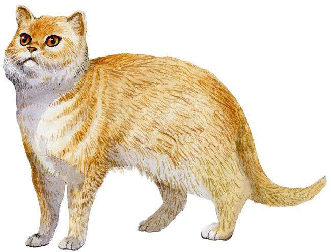 猫 水彩动物插画