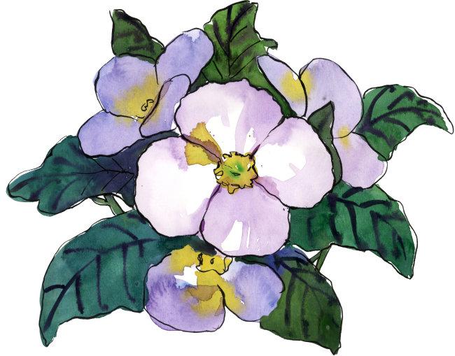 水彩植物花卉插画下载