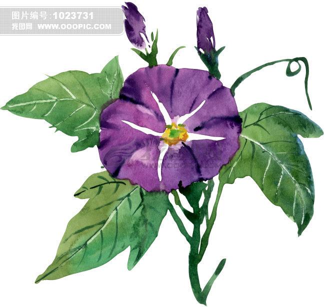 紫花插画图片下载 紫花 花 紫色 花 绿叶 绿色 鲜花 鲜艳 花朵 绘画