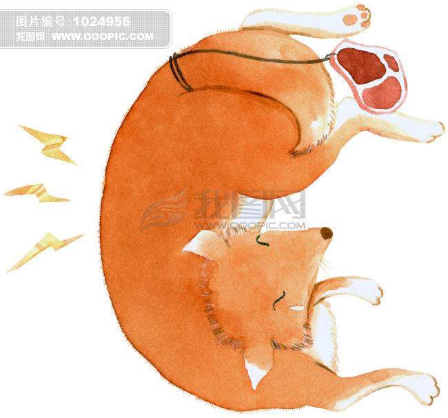狐狸 睡觉 肉片 黄色