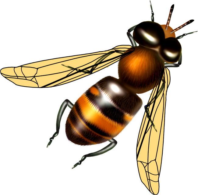 写实昆虫图片