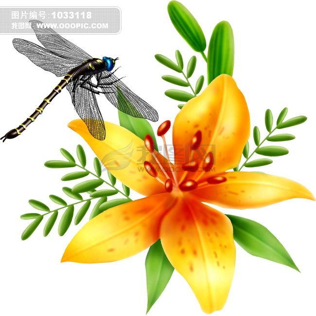 写实昆虫图片图片素材(图片编号:1033118)