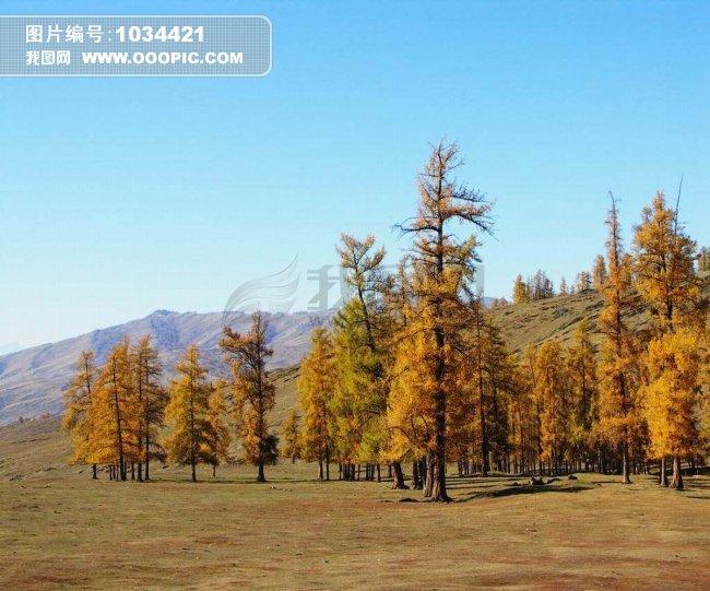 首页 正版图片 动物植物 植物 > 自然风光  户外 白昼 摄影 蓝天 森林