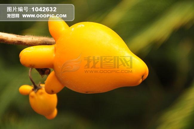 奇特的植物图片素材 1042632图片