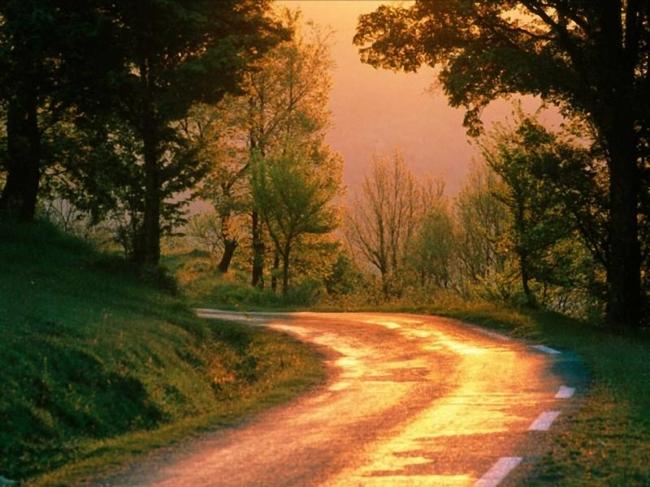 风景ps素材 风景画图片 风景18 风景花朵 风景背景 风景图 树木 树木