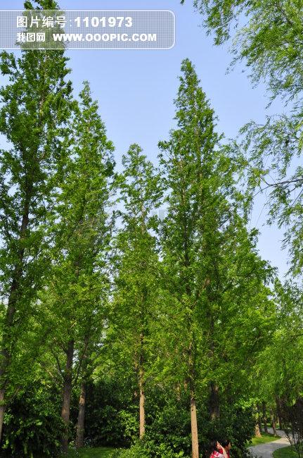 树木图片模板下载 树木图片图片下载 户外 白昼 摄影 树木 蓝天 绿色