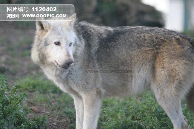 野生动物图片素材(图片编号:1120402)_动物图片库