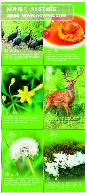 动物展板设计动物