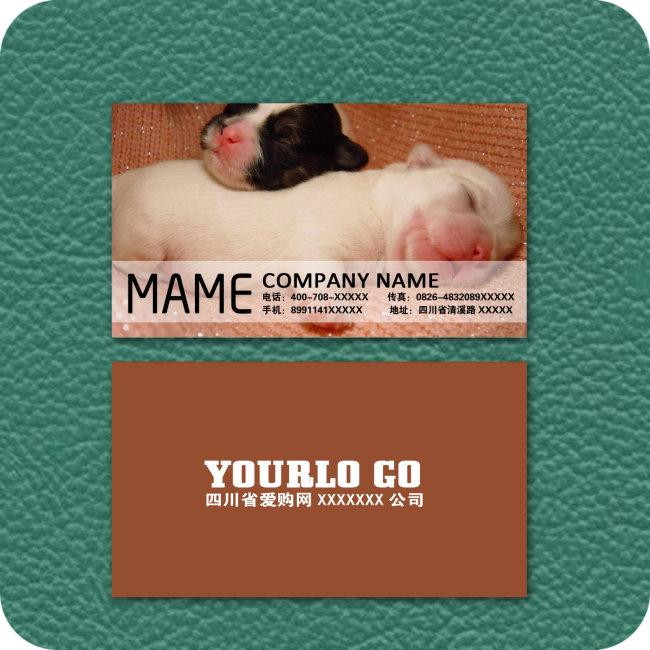 动物 模板/[版权图片]动物狗 名片模板下载