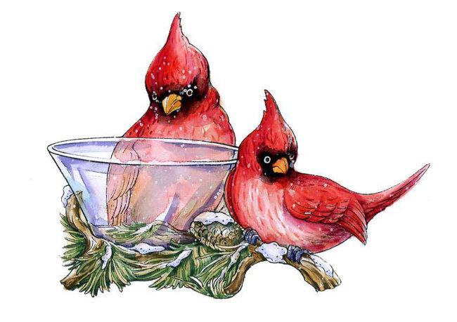 红鸟和松枝图片下载 红鸟和松枝 红鸟和松枝 圣诞节 圣诞节手绘图