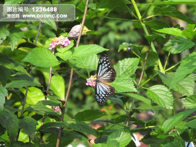 蝴蝶与花朵图片素材(图片编号:1236488)_动物图片库