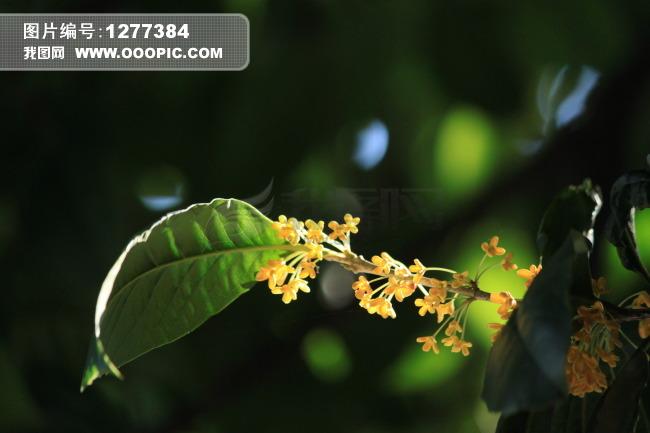 鲜花树叶编织动物图