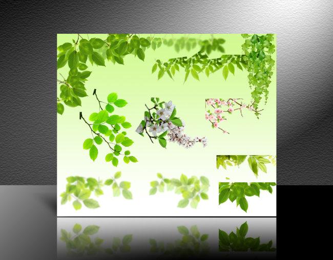 素材 绿色植物/[版权图片]绿色植物素材 绿叶