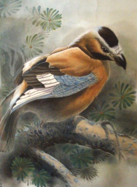 工笔鸟 手绘 树 写实