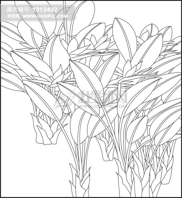 室内花卉手绘线稿