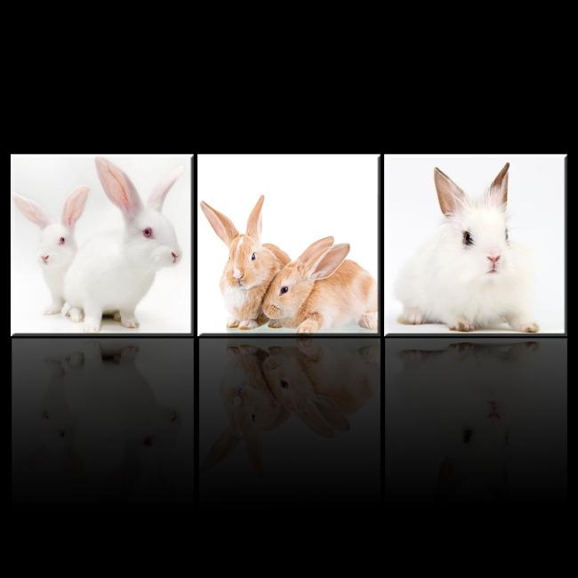 可爱/[版权图片]可爱兔子