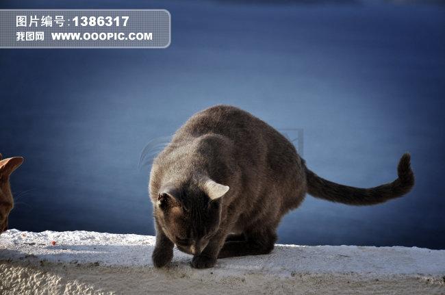 lomo看小猫图片素材(图片编号:1386317)_动物图片库