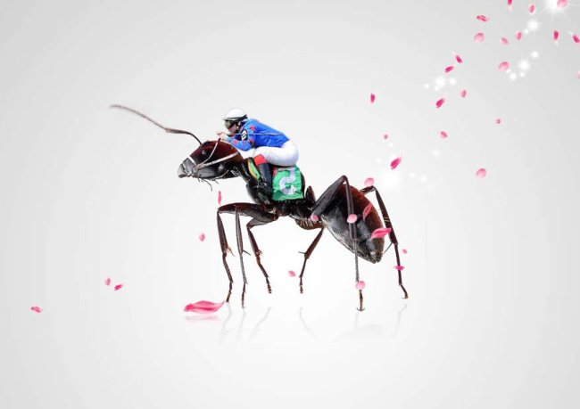 骑士,蚂蚁,创意海报图片