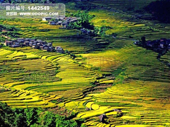农村梯田风景手绘