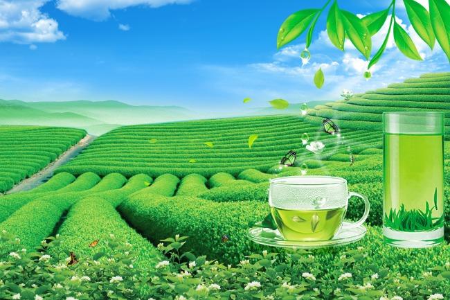 茶宣传海报01模板下载