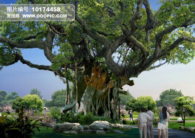 设计稿 室内装饰|无框画|背景墙 园林设计 > 生态景观古树效果图