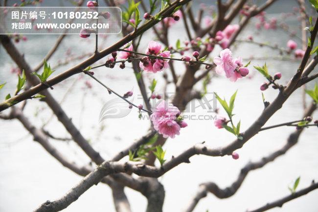 高档假桃花树