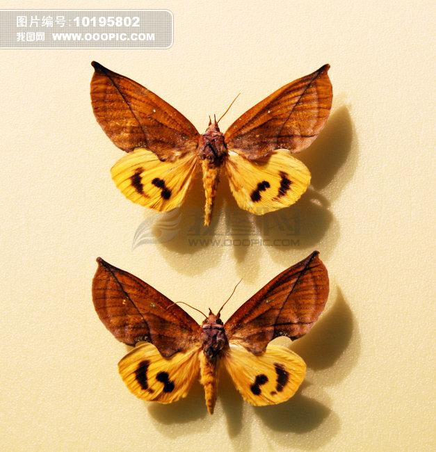 昆虫标本图片素材(图片编号:10195802)_动物图片库