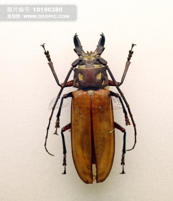 甲壳虫标本图片素材(图片编号:10196380)_动物图片库