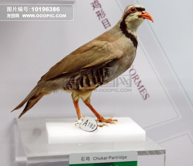科普 教育基地 北京 朝阳区 展览 展品 馆藏 标本 动物 鸟类 飞禽  标