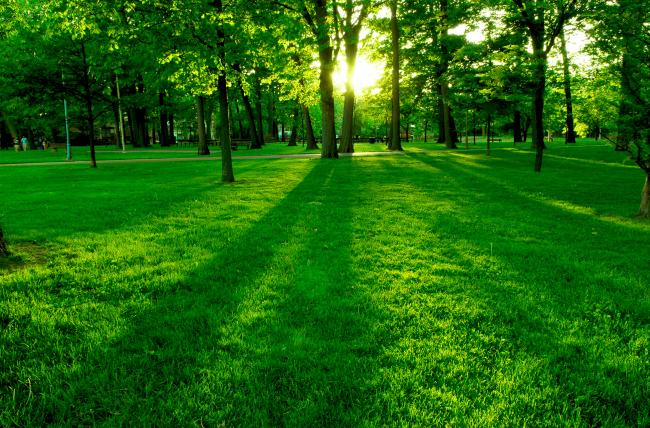 草地 绿色素材