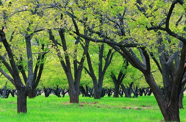 自然环境 背景 背景素材 绿草 茂密 嫩绿 参天树木 大森林 春天 丛林