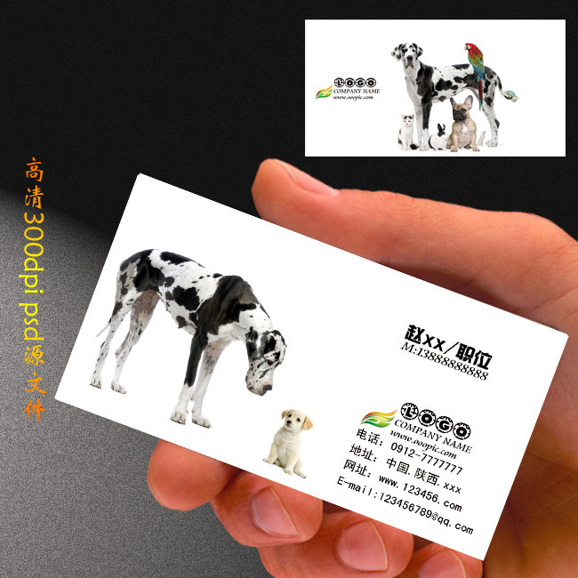 宠物名片设计模板下载 宠物名片设计图片下载 名片 名片模板 名片设计